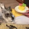 #愛犬ラブの為のブログ。「100記事!」越えに感謝!!