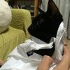 猫の袋詰め