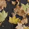 カナダの寒さ対策。9月下旬からすでに寒い!室内でもあったかグッズは必須《秋編》