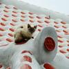 猫ちゃんとの同居生活 3ヶ月目