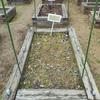 ミシマサイコ花壇作り
