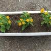 4-51   愛すべき花たち〜単純に欲しい花の色がありまして…〜