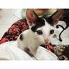 セブ島ゲストハウス「Feel at home」で犬猫に癒される日