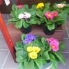 心の冷え取り❤お花✨