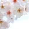 東京下町桜日記!大横川沿いの桜のトンネルがとびきり綺麗だった
