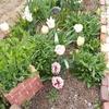 春の花壇続き