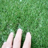 まるで本物の芝生!?約1万円で手軽にベランダをオシャレに大改造する方法。