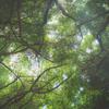 旅先での徒然 ~押し寄せる緑~