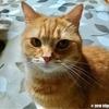 おやつ食べてご満悦な猫~おかわりください~