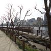 隅田川テラスを駒形橋から両国橋にかけてブラブラ散歩(笑)!
