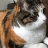 【愛猫日記】毎日アンヌさん#41