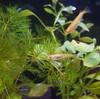 メダカを飼うとき我々が対峙するのは魚ではなく生態系である