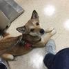 皮膚病で犬の動物病院に行ってきました