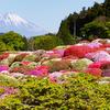5月は箱根にツツジを見に行こう!