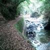 京都トレイル試走 嵐山~沢池