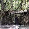 【安平樹屋】台南の人気観光スポットはまるで天空の城・ラピュタの世界だった!