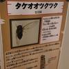 【小ネタ】タケオオツクツク