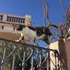サントリーニ島の猫とロバ