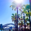 シドニーでホエールウォッチングに行くなら知っておいたほうがいい事
