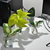 水挿しで増やしている観葉植物たち(ポトス・ガジュマル・発根促進剤・発根)