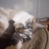 猫の親や兄弟は猫ではなく人間なのだろうか?