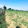 アンコールワット個人ツアー(239) カンボジア個人ツアーと農業