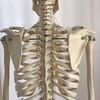 骨から整え筋肉を和らげましょう。