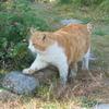 猫がいると【やる気】は出るけど【作業効率】は下がる。