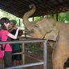 スリランカ1人旅行⑦ピンナワレの象の孤児園へ