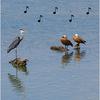 スペイン語の音楽を聴く「Solfeo de los patos」