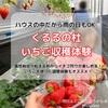 【北広島】4月・5月から出来る いちご狩り体験☆『くるるの杜』のハウスイチゴは果肉が柔らかくて激甘!