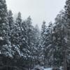【超おすすめ!】キャンプ場〜キャンプリゾート森のひとときはいいところ。〜