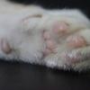 壁の爪とぎ防止対策*猫