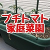 GW最後はプランターでプチトマト栽培に挑戦!