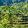 バリ島に訪れるべき11の理由【インドネシア】