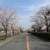 多摩川桜百景 -2. 等々力緑地-