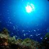 ♪少人数制アドバンス講習で慶良間といえばパルウェーブ♪〜沖縄ダイビング〜