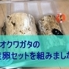 オオクワガタの産卵セットを組みました