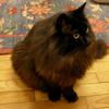 猫ログ付録:黒い猫ちゃんを撮るのは難しいから勉強したことまとめて、で僕の設定を