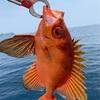 【釣行記】穏やかすぎる丹後の海を釣る