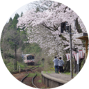 金澤桜百景