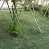 裏庭の芝の管理 芝刈り第二弾!