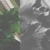「ひからびた林檎」