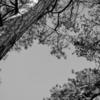 darktable3.4 のレファレンスカード