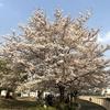 善福寺川(東京都杉並区)とは?「善福寺川緑地の桜並木」も紹介。