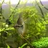 アクアリウムを始めて1ヶ月。稚魚増殖でピンチ!