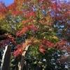高尾山にて晩秋の紅葉を満喫してきました🍁色々な発見がありオススメです✨✨