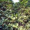 金木犀 真実の香り 巡るいのち 巡る季節