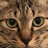 保護猫 Coteru 52日目 - 覗き魔