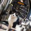ネコさんを探すには午前中が良い、という岩合さんのアドバイスを聞く